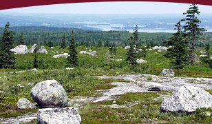 Image: Guysborough Barrens